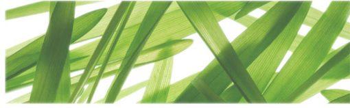 fototapety na szybę trawa