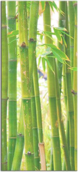 fototapeta na okna bambusy