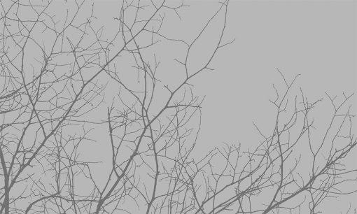 gałęzie jako naklejka okienna z efektem piaskowania