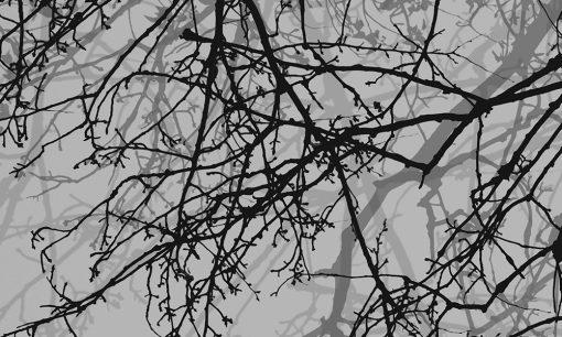 nowoczesne naklejki na okna gałęzie drzew
