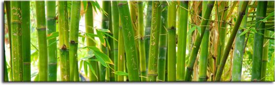 fotoszyba zielone bambusy