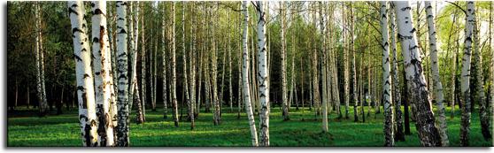 fototapety pod szyby las
