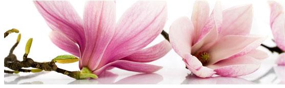 fototapety pod szkło magnolie