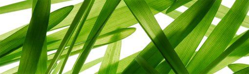 fototapeta pod szybę zielona trawa