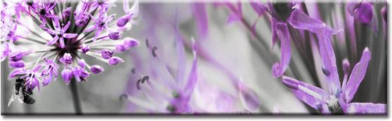 fototapety pod szyby z kwiatami