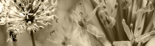 brązowe kwiaty folia na szybę w kuchni