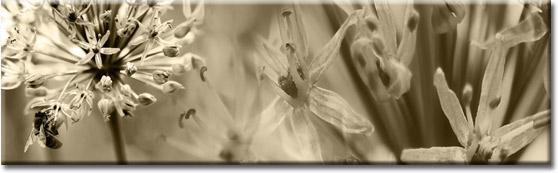 fototapety na szyby kwiaty
