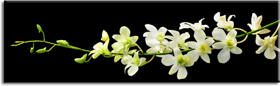 naklejki pod szyby orchidea