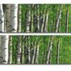 naklejki na szyby brzozy