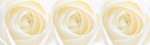 folia na szybę kremowe róże