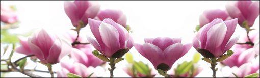 fototapeta na szybę różowe magnolie