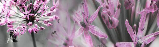 folia na szybę z kwiatami