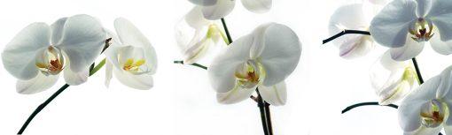 laminat na szybę białe storczyki