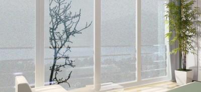 folia na okna drzewo