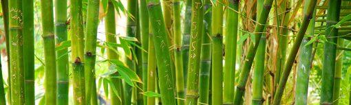fototapeta pod szklany panel bambusy