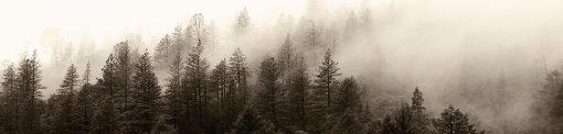 naklejka na szyby z beżowym lasem